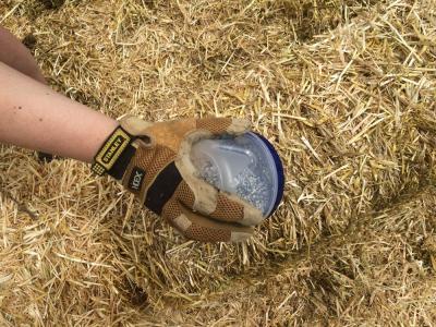 Straw Bale Garden Part 1 Chella S Common Cents